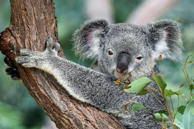 Where to stay in Cairns, QLD - Kuranda